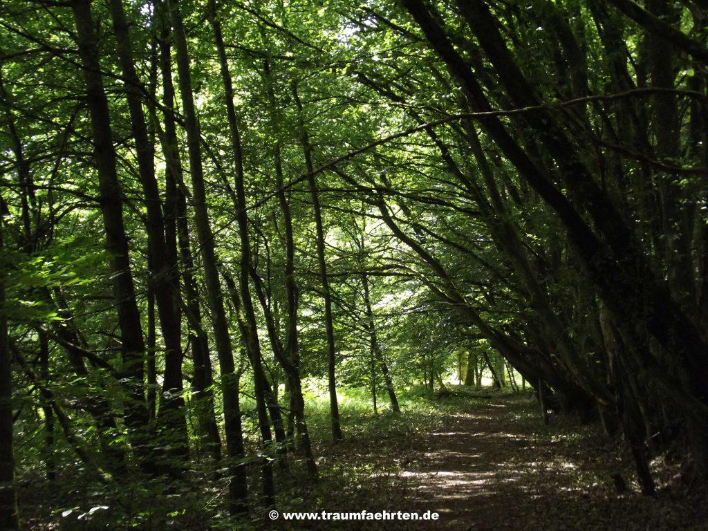 Wanderwege Wingen-sur-Moder