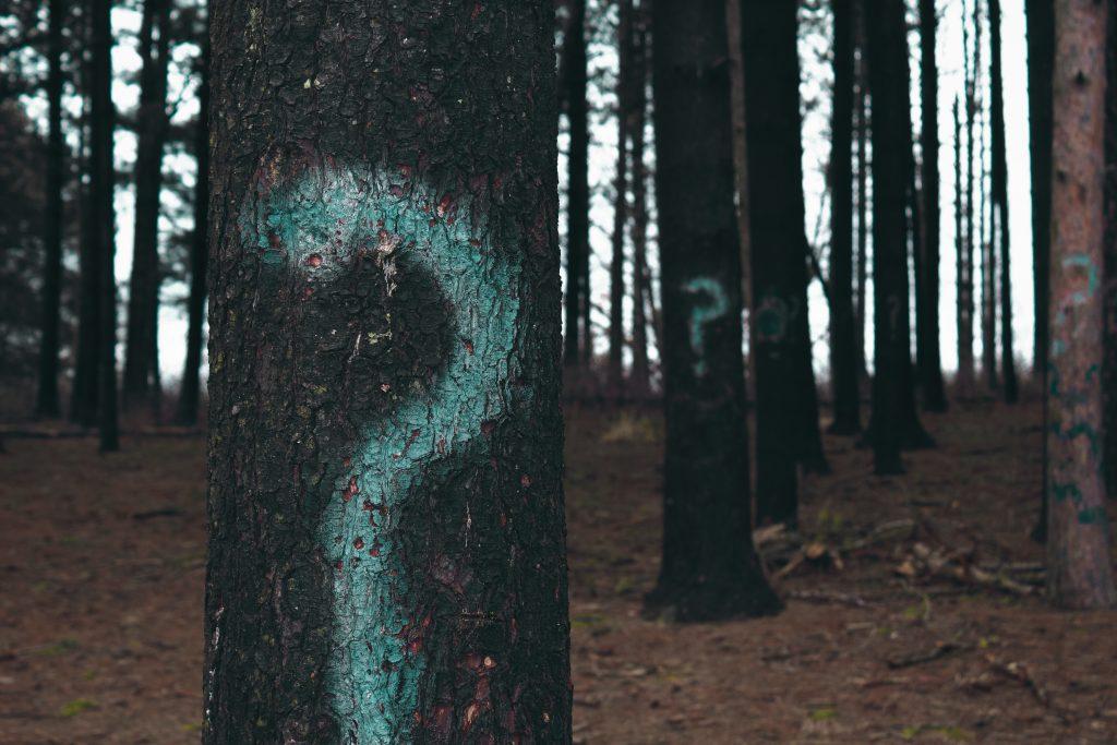 Fragezeichen Wald